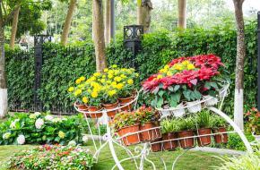 Ландшафтное обустройство садового участка